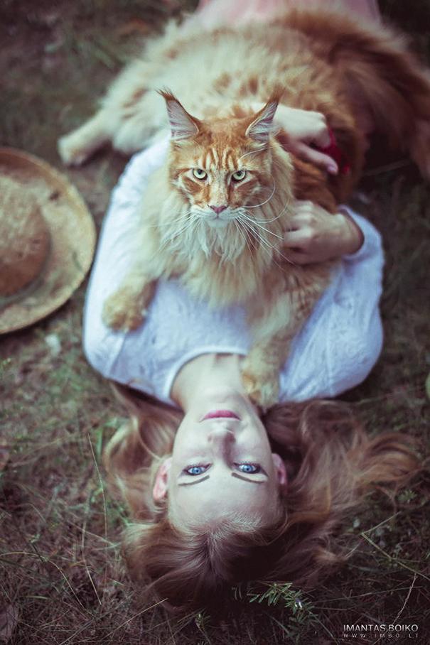 nórska lesná mačka (4)