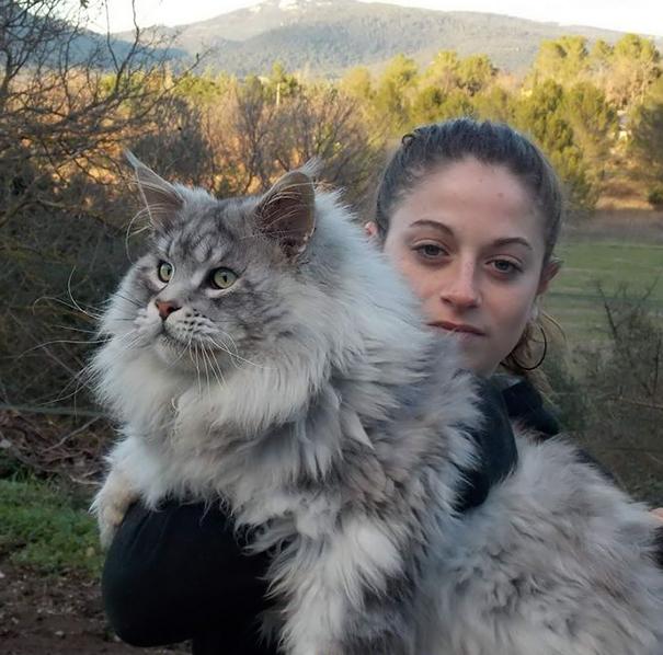 maine-coon-cat (7)