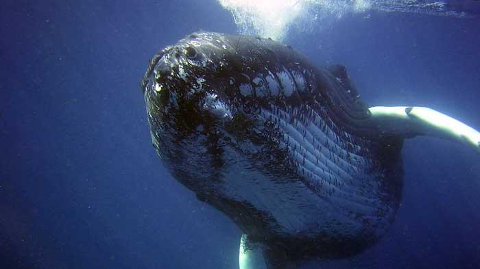 najstaršie veľryby (3)