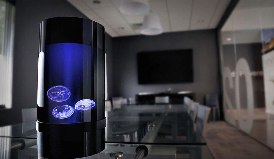 domaca meduza (1)