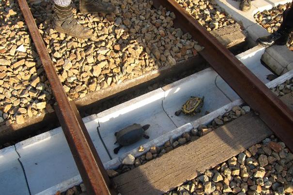 tunel pre korytnačky (1)
