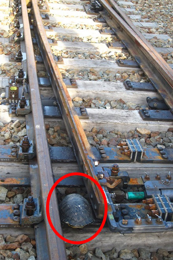 tunel pre korytnačky (2)