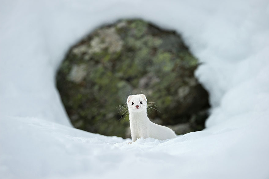 top 20 fotiek National Geographic (10)