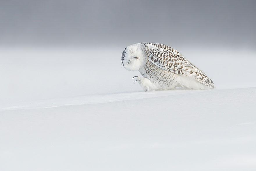 top 20 fotiek National Geographic(16)