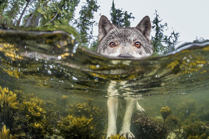 top 20 fotiek National Geographic (20)
