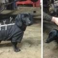 pes s nastrojmi (5)