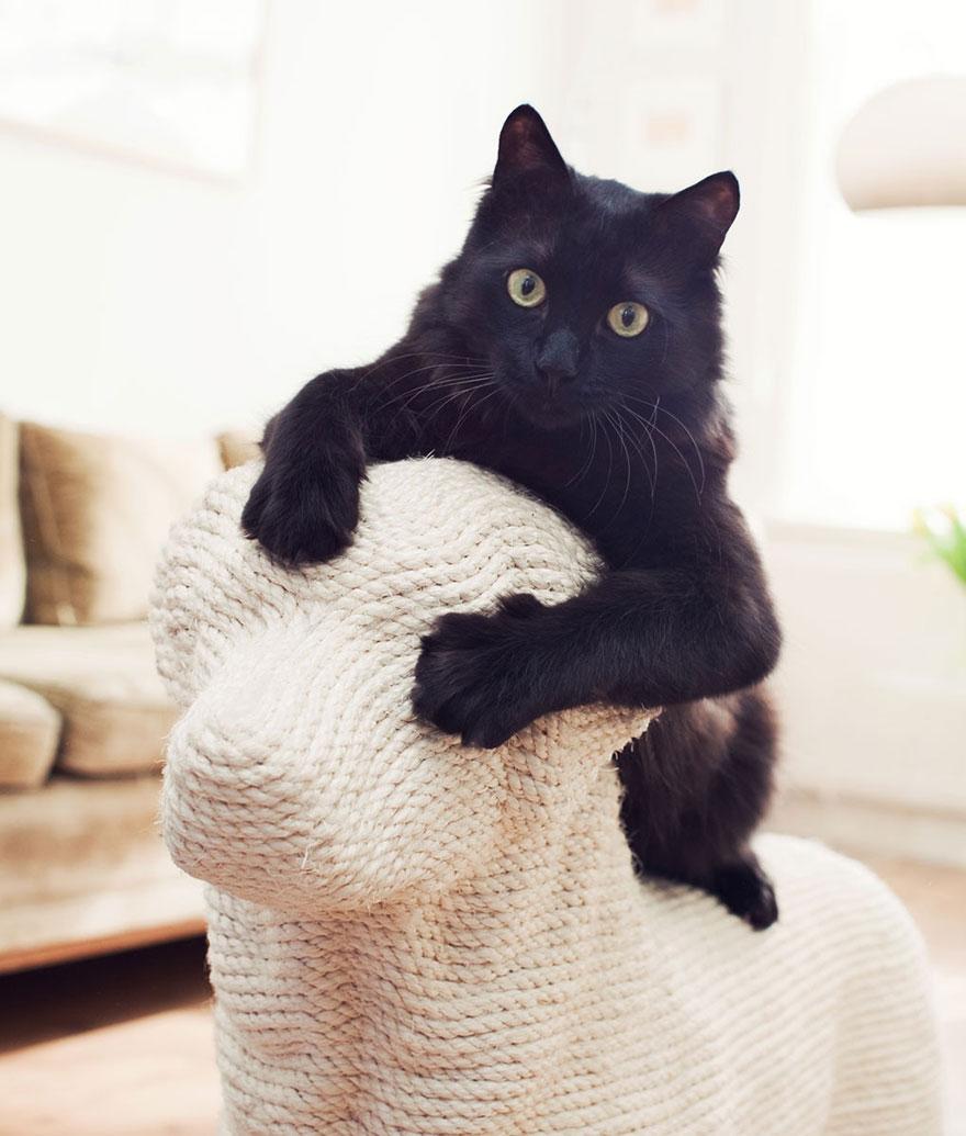 pomsta mačiek (2)