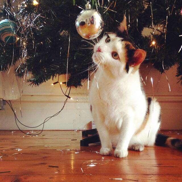vianocne macky (10)