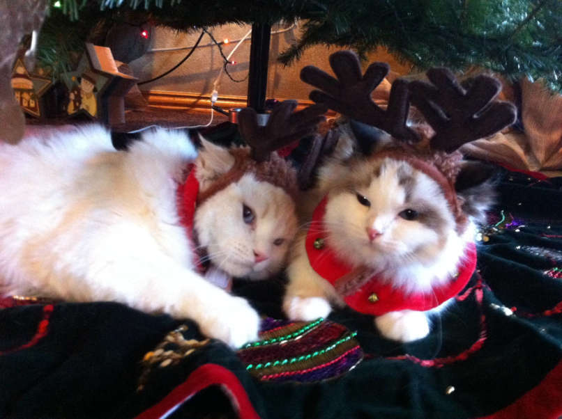 vianocne macky (11)