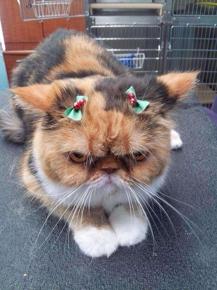 vianočné mačky (15)