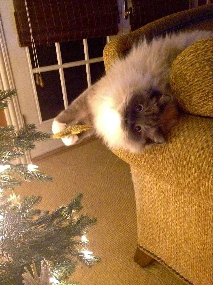 vianocne macky (2)