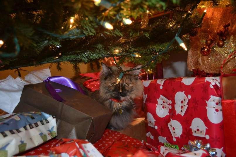 vianocne macky (3)