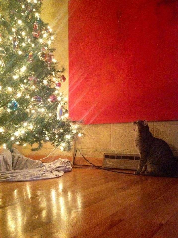 vianočné mačky (4)