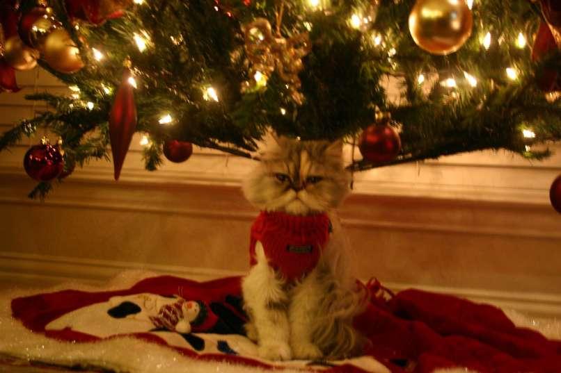 vianocne macky (5)