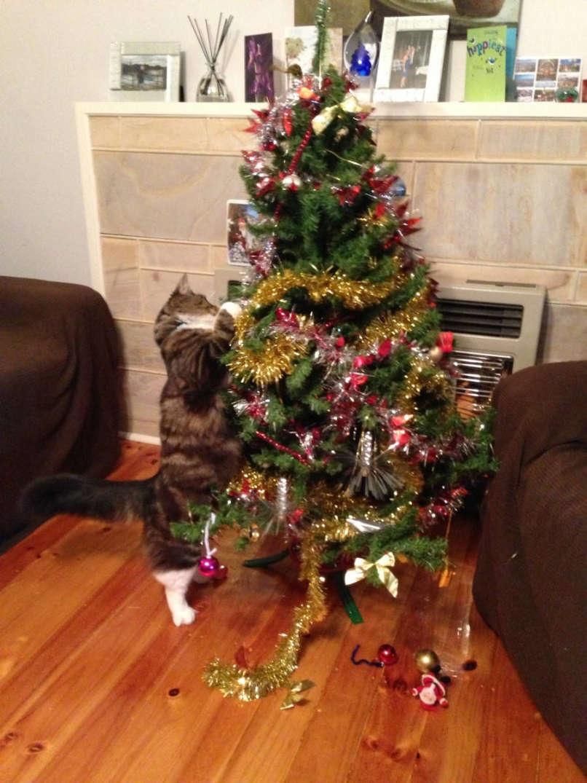 vianocne macky (8)