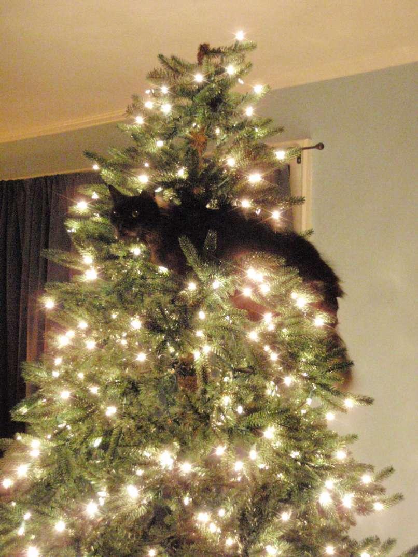 vianočné mačky (9)