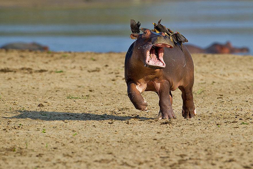 vtipné zvieratká(7)