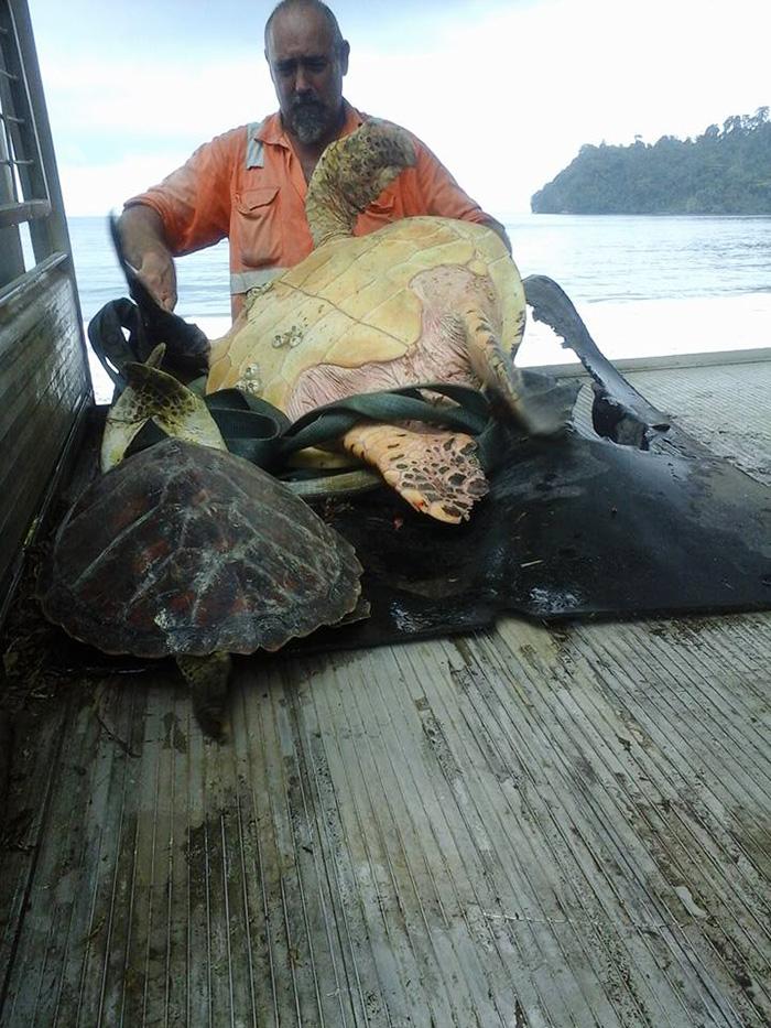 korytnačky naspäť do mora (1)