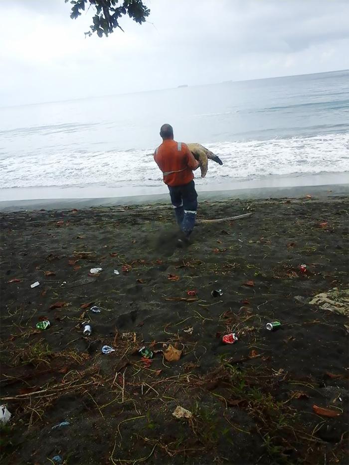 korytnačky naspäť do mora (2)