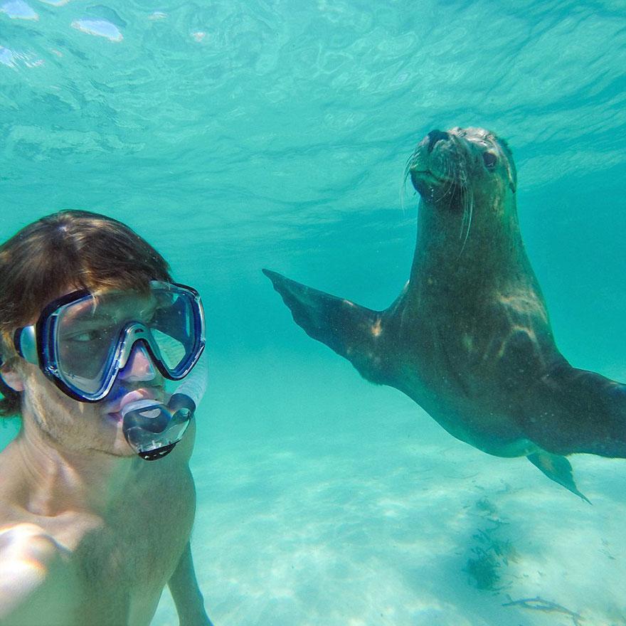 zvieracie selfie (10)