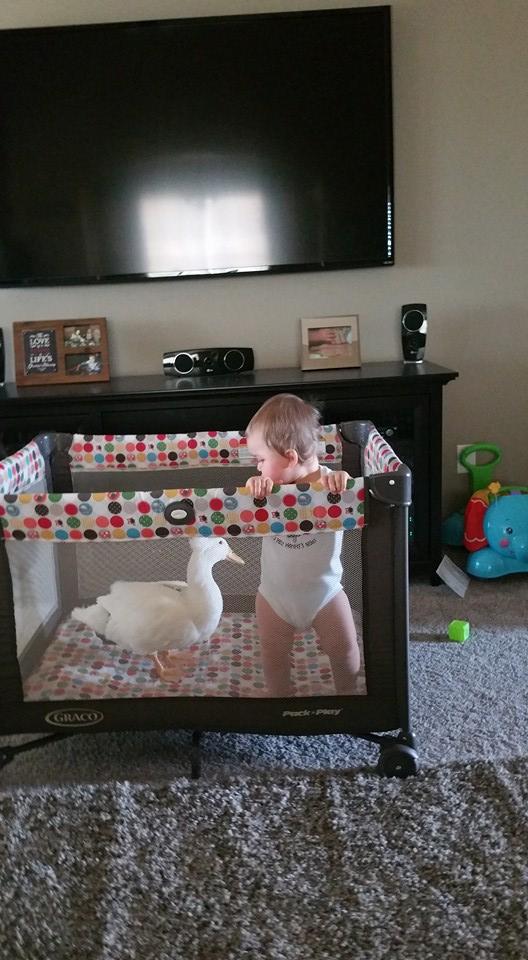 chlapec a kacka (4)