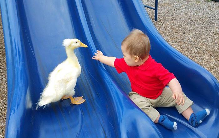 chlapec a kacka (8)