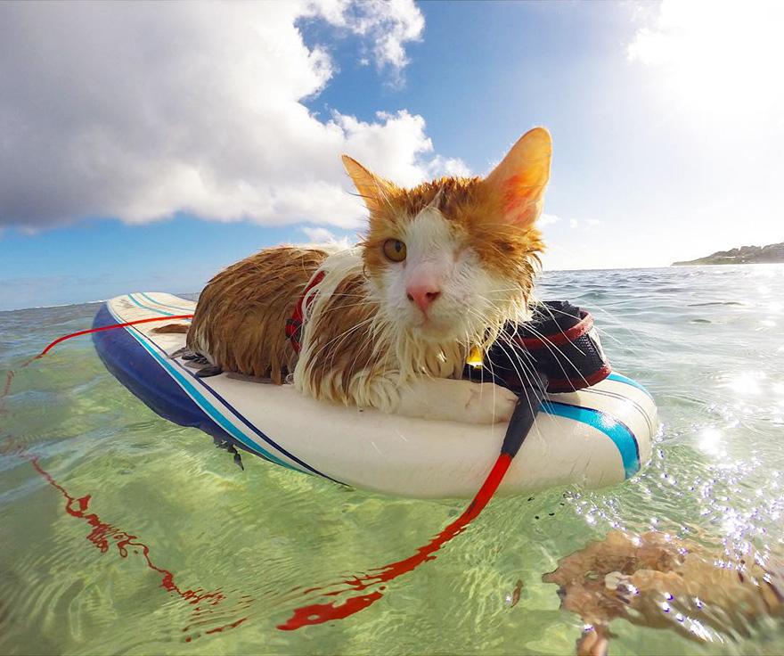 jednooka macka surfer (1)