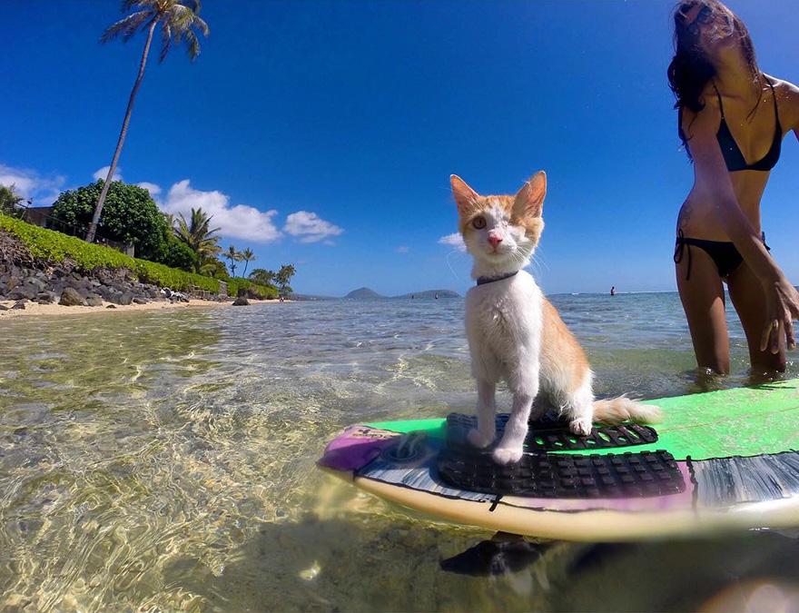 jednooka macka surfer (4)
