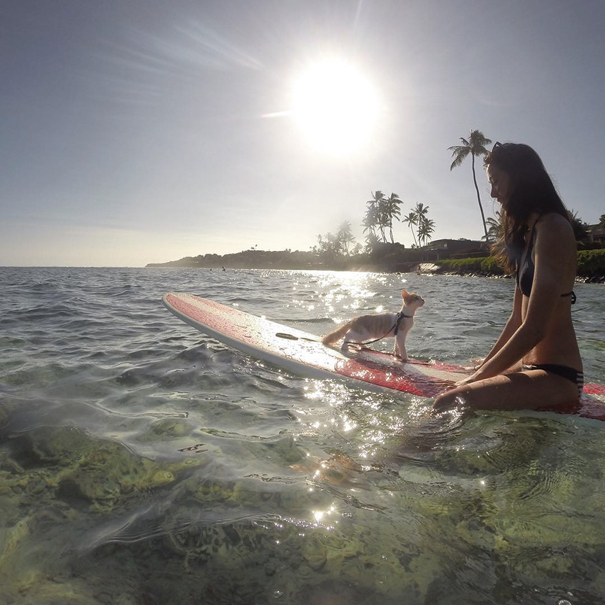 jednooka macka surfer (5)