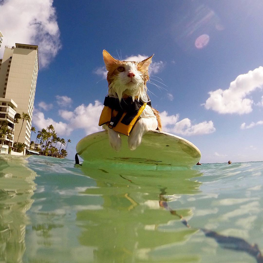 jednooka macka surfer (6)
