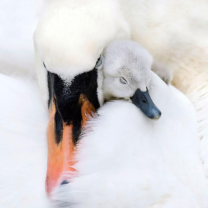 laska rodicov priroda (2)