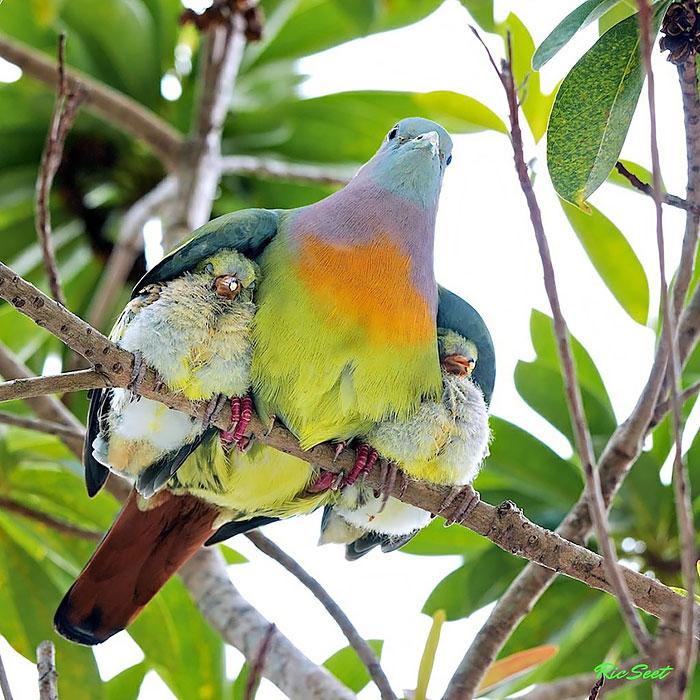 laska rodicov priroda (3)