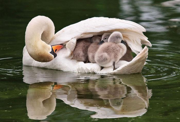 laska rodicov priroda (5)