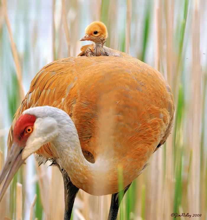 laska rodicov priroda (9)