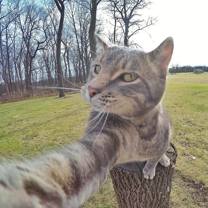selfie mačka (2)