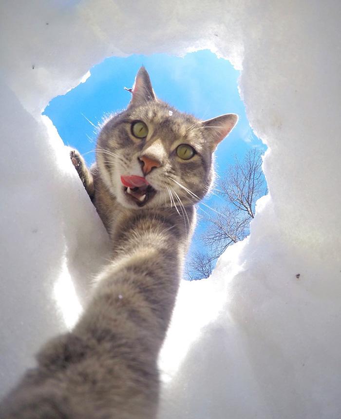selfie mačka(6)
