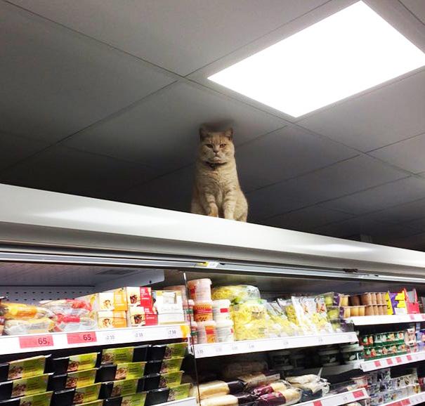 macka v obchode (2)
