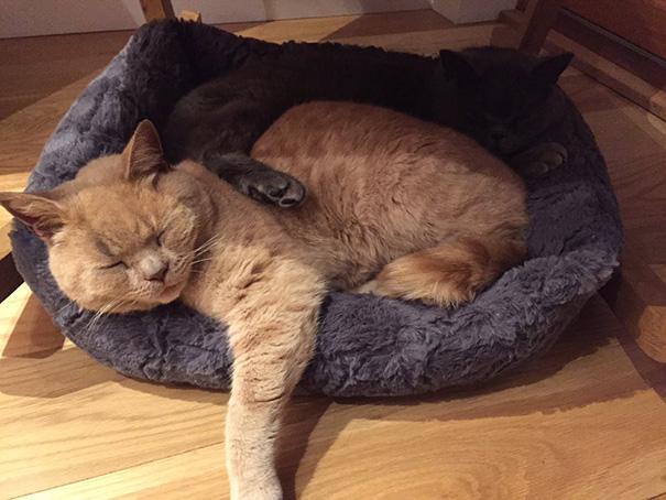 mačka tvrďas (7)