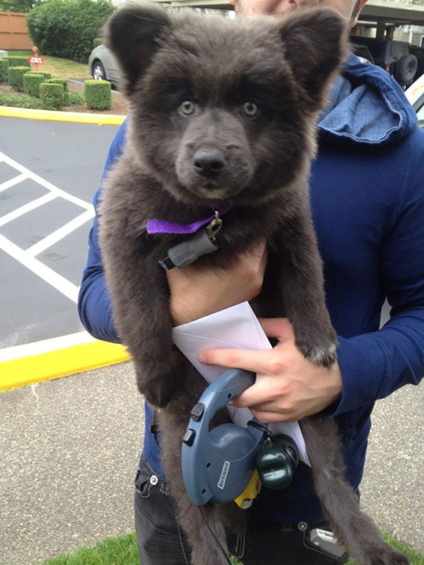 psy medvede (1)