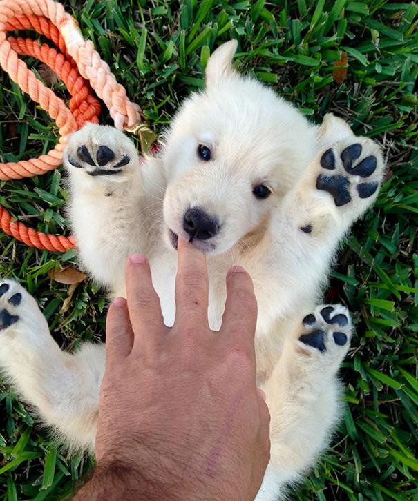 psy medvede (2)