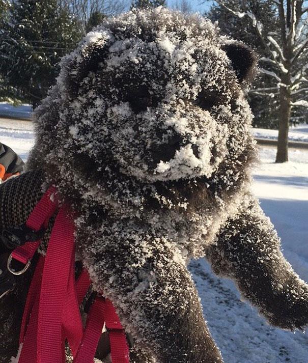 psy medvede (7)