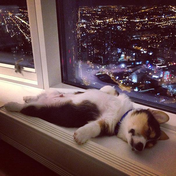 spiace zveratka (2)