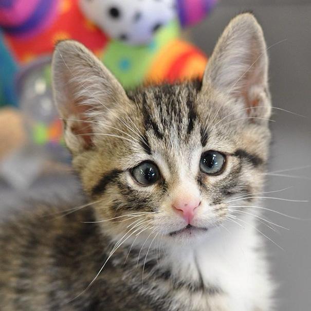 ustarostená mačka (2)