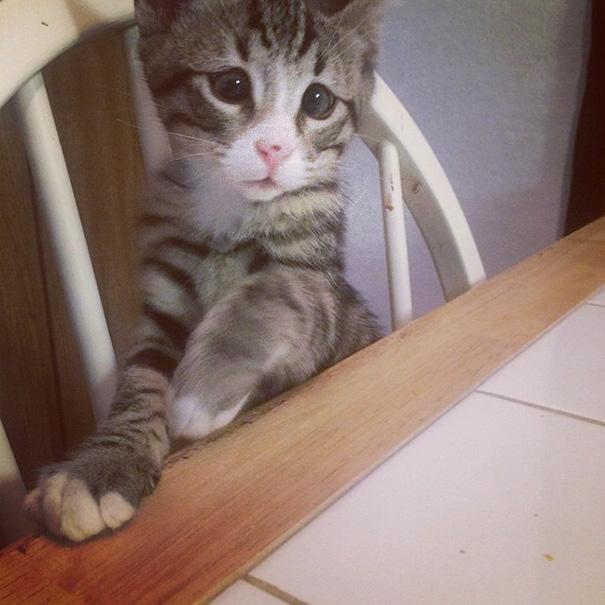 ustarostená mačka (4)