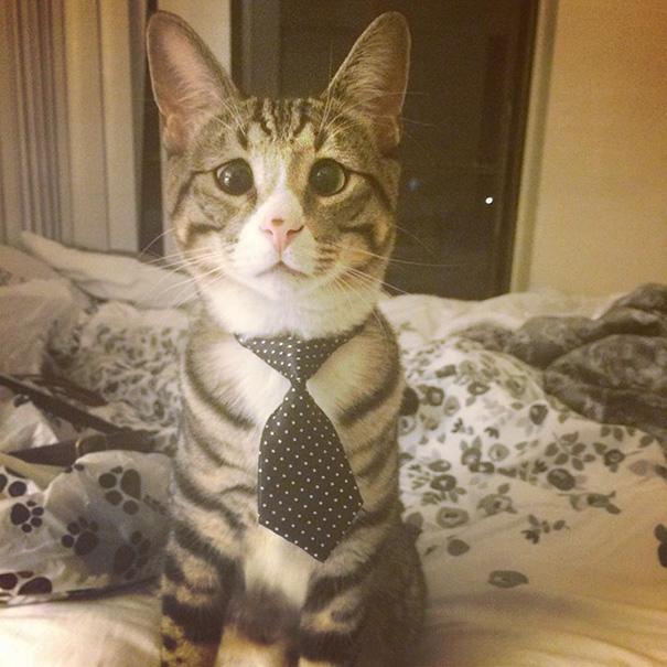 ustarostená mačka (6)