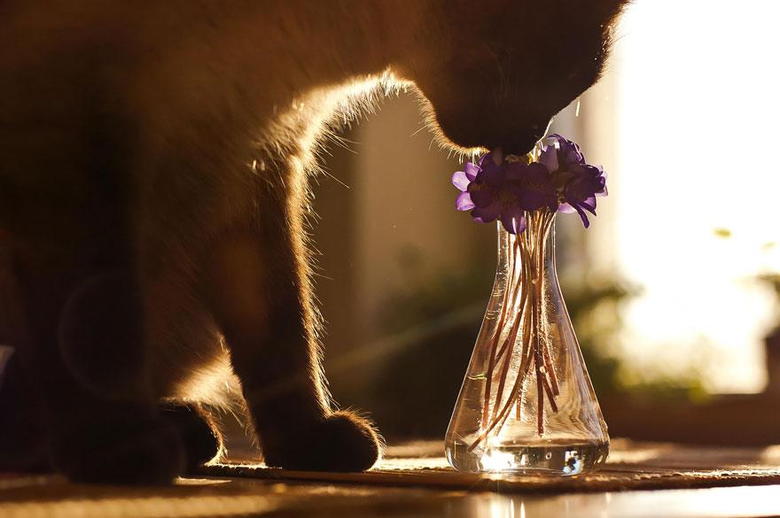 zvierata nuchaju (2)