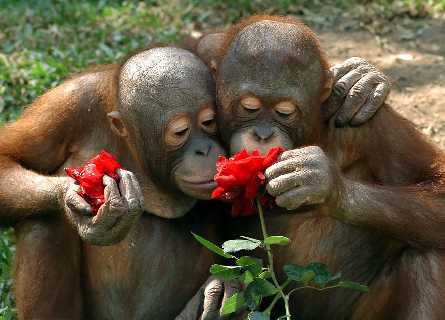 zvieratká si vychutnávajú prírodu (3)