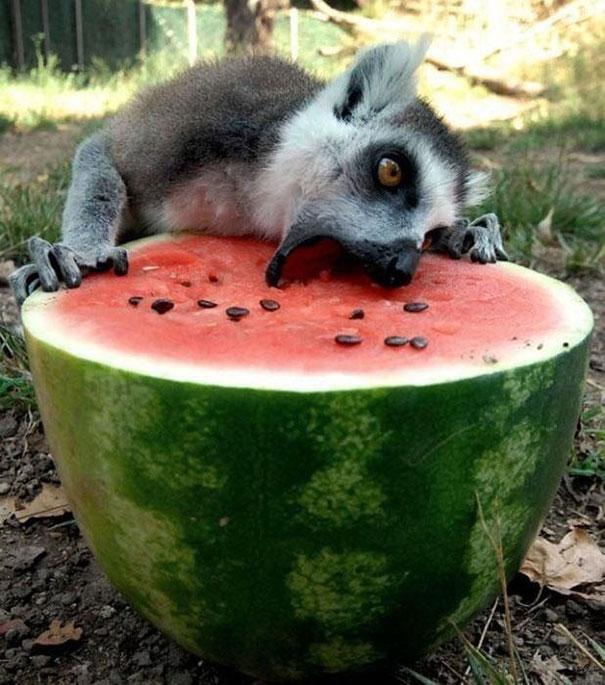 zvierata papaju (9)