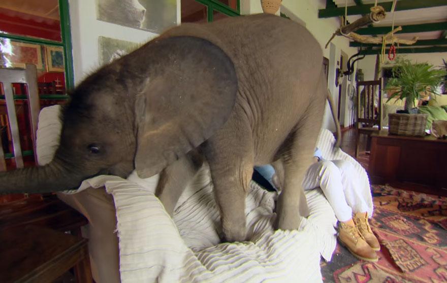 male slonica (3)
