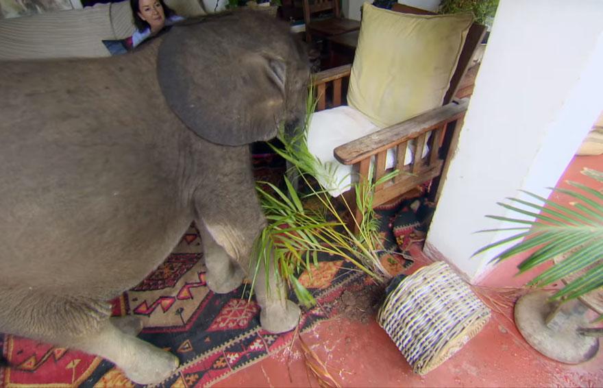male sloníča (4)